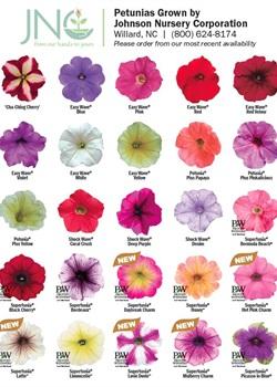 Petunia Chart